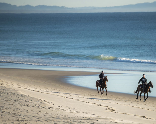 Horsing in Byron Bay 40 minutes from Halcyon House