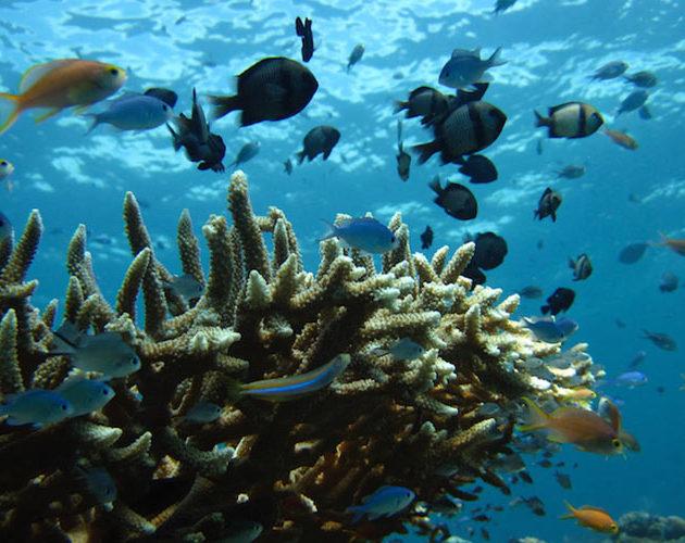 Coral Reefs surrounding Moro Ma Doto Morotai Island Surf Resort Indonesia